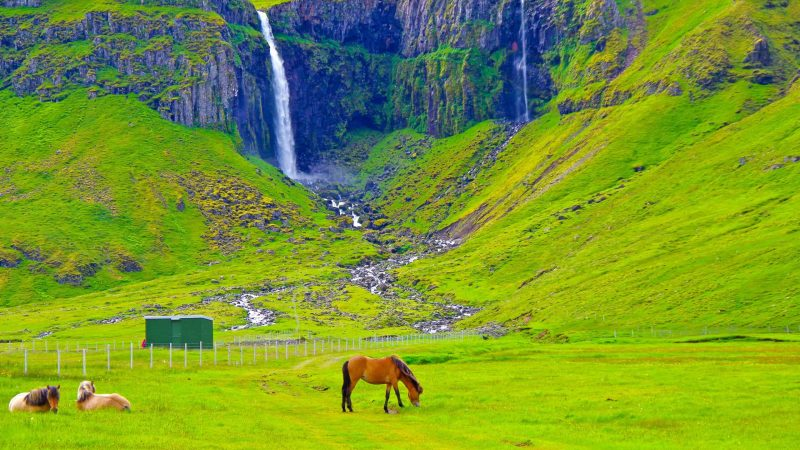 a horse standing in front of Grundarfoss waterfall next to Grundarfjordur village in Snæfellsnes Peninsula