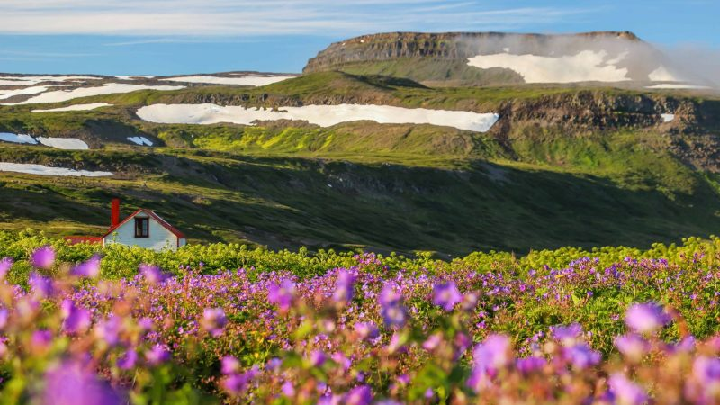 Hornstrandir Nature Reserven in the Westfjords of Iceland