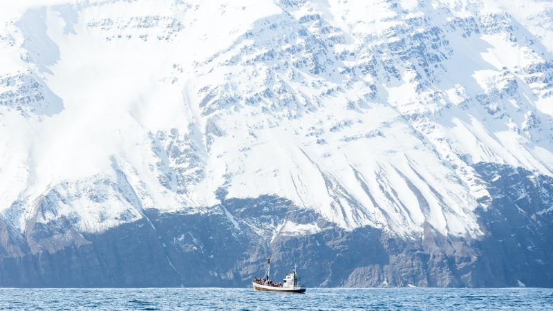 a boat on a whale watching tour in Húsavík north Iceland with a magnificent white mountain in the background