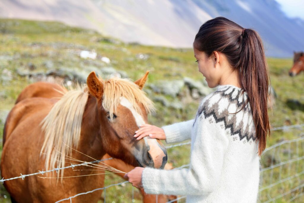 The Icelandic Horse and a girl in an Icelandic wool sweater