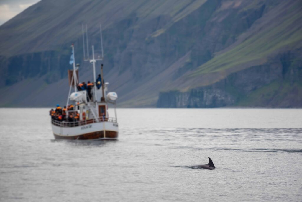 whale watching boat tour in north Iceland