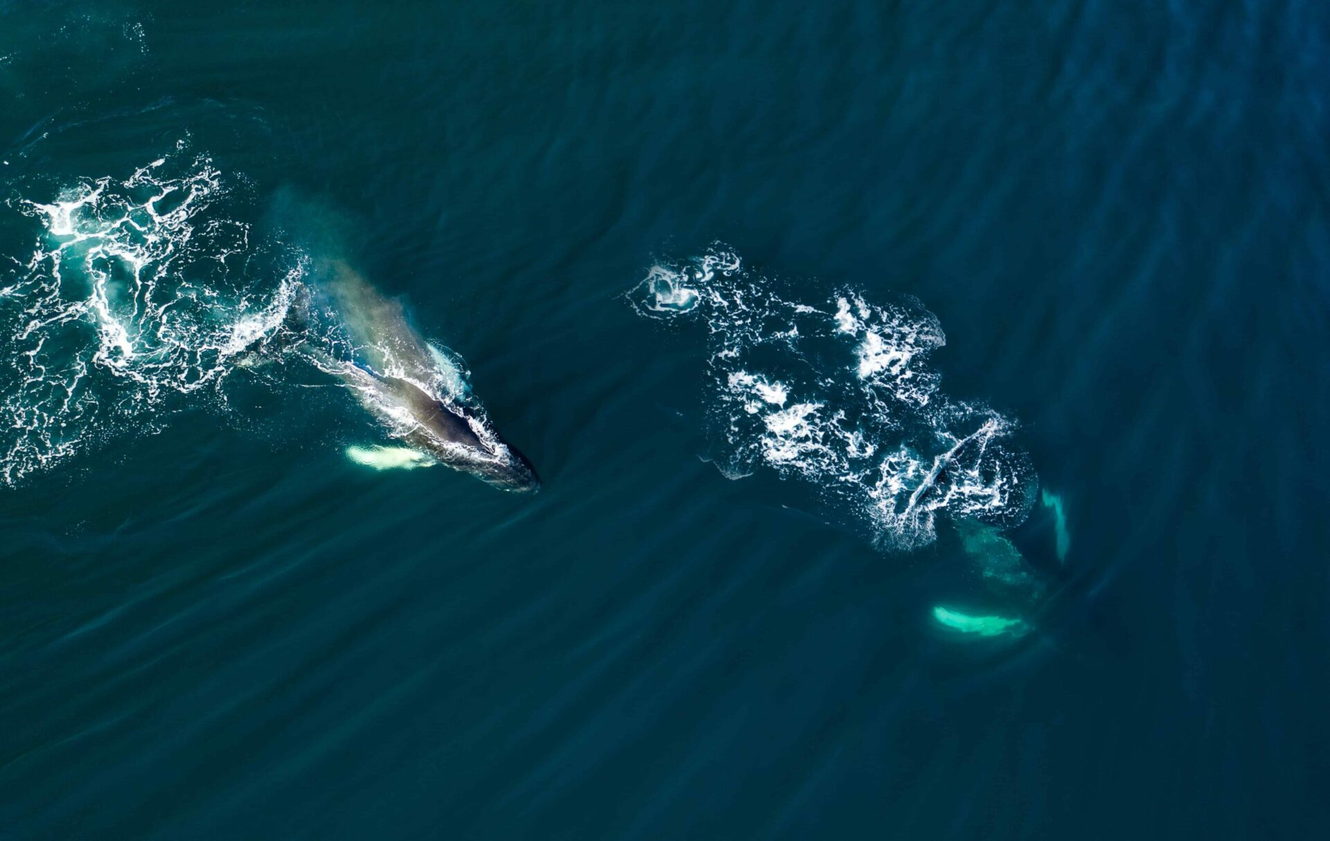 iceland whales (4)