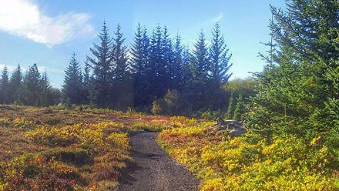 path on the Reykjavik horse riding tour
