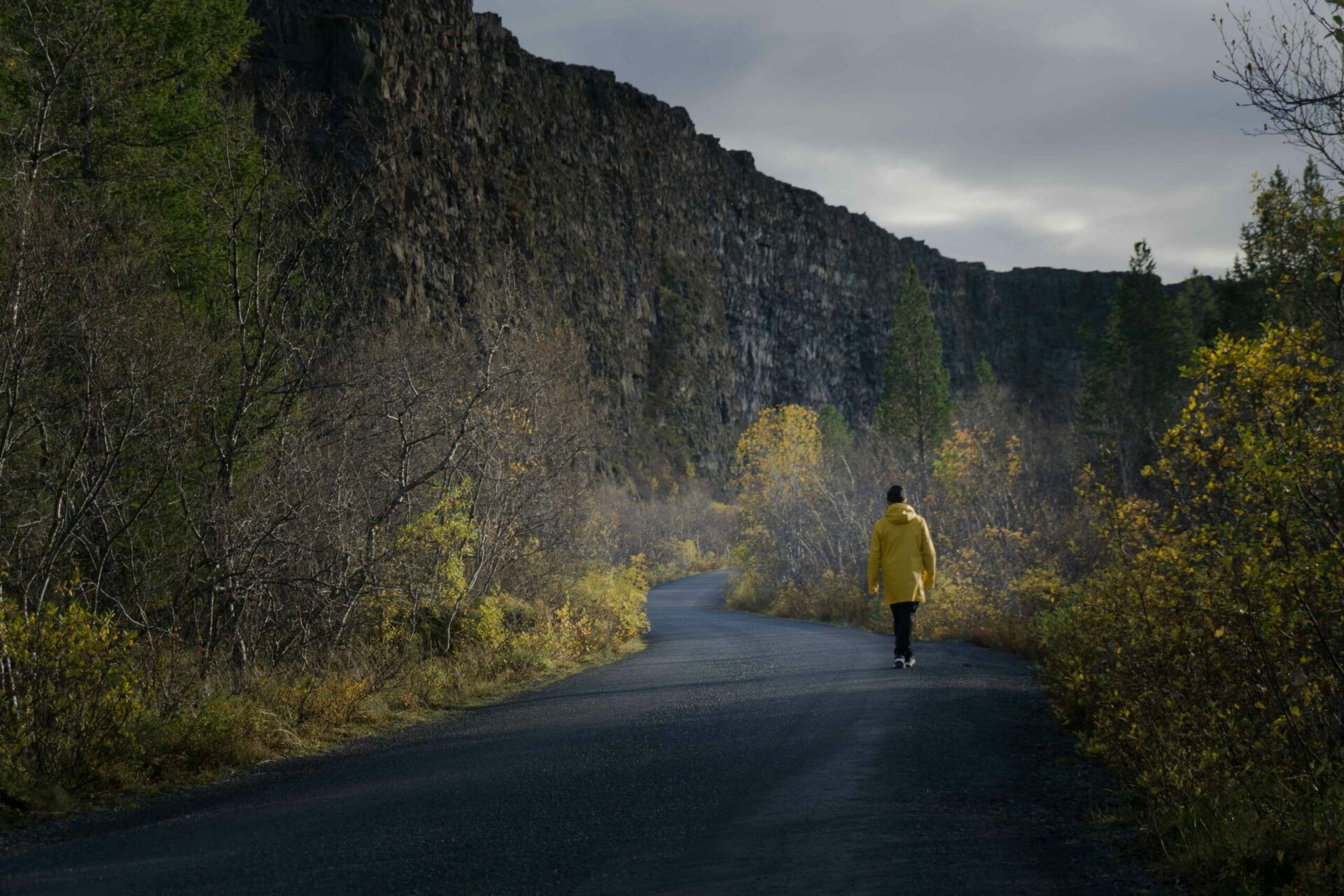 Man in a yellow raincoat walking in Ásbyrgi canyon in north Iceland
