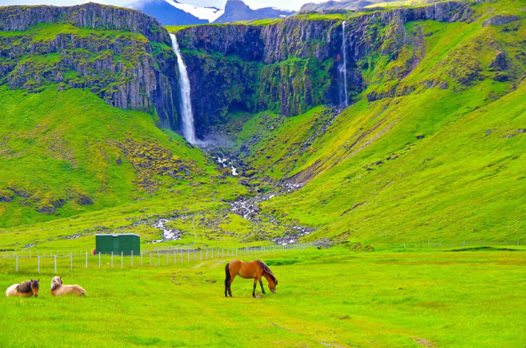a horse standing in front of Grundarfoss waterfall next to Grundarfjordur village in Snæfellsnes Peninsula