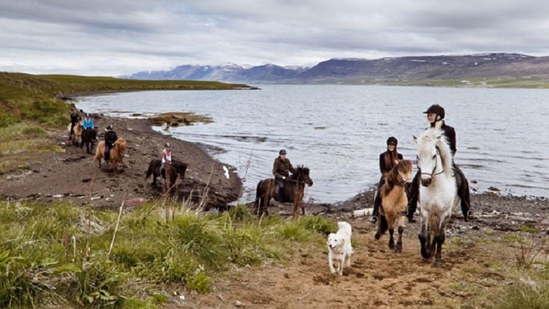 Horse Riding in Akureyri north Iceland