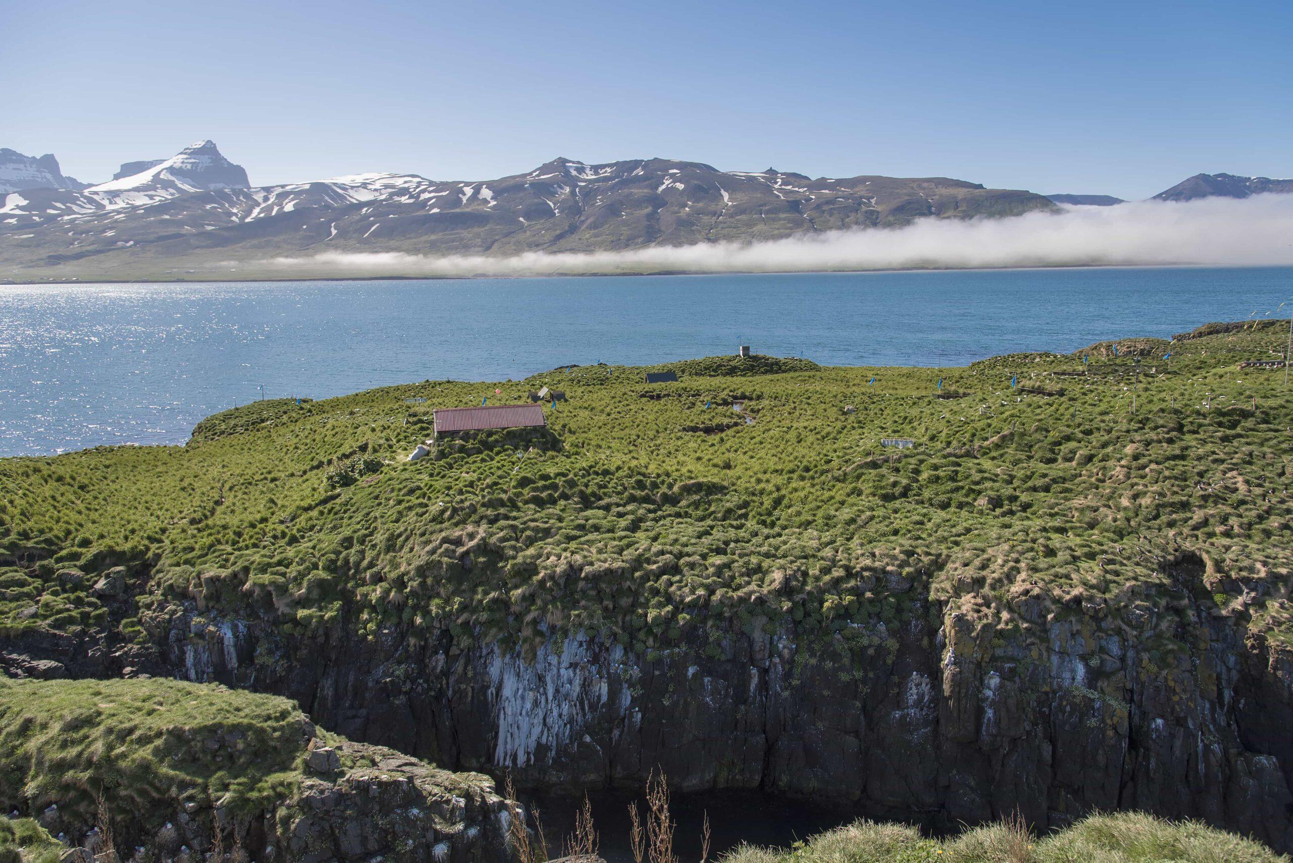 puffin cliffs in Borgarfjörður Eystri East Iceland