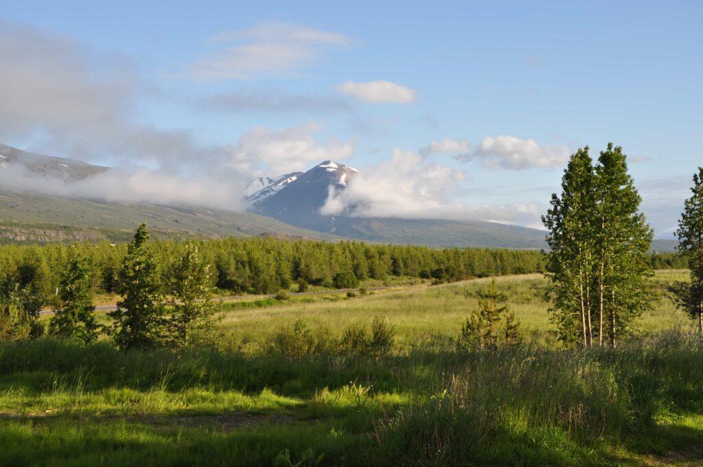 Hallormsstaðaskógur forest in East Iceland
