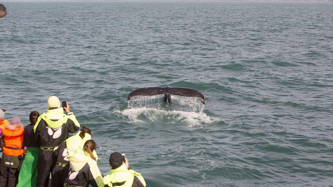 Húsavík Whale Watching