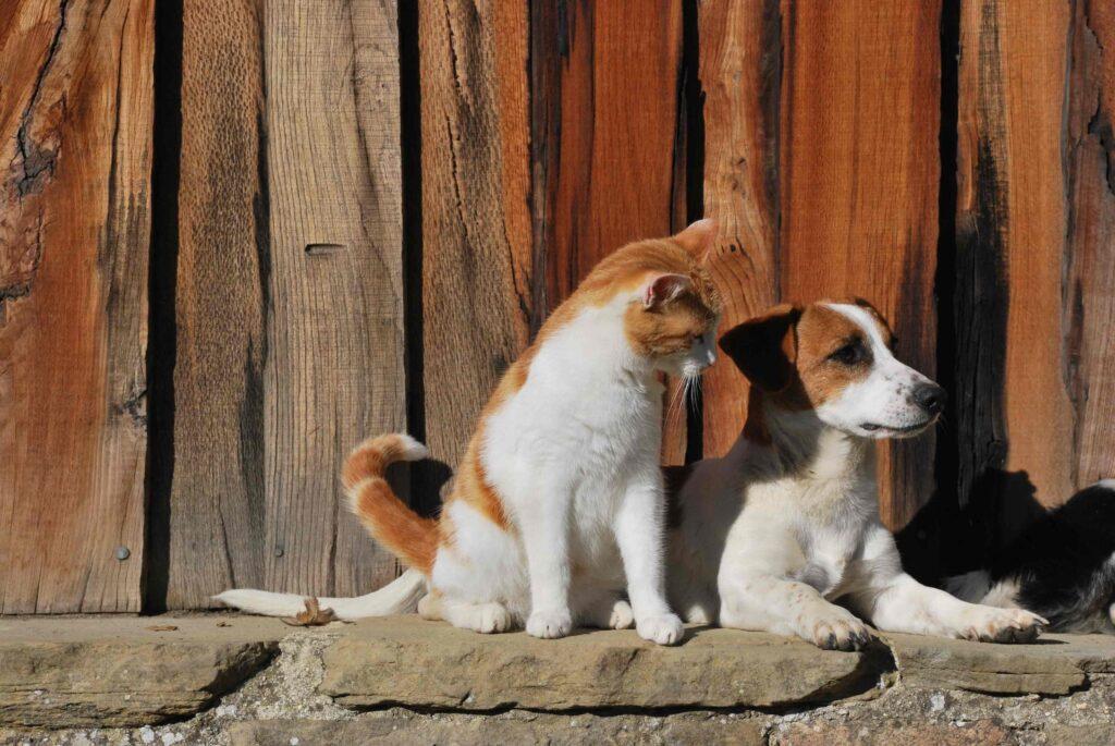 kitten and puppy in Slakki petting zoo