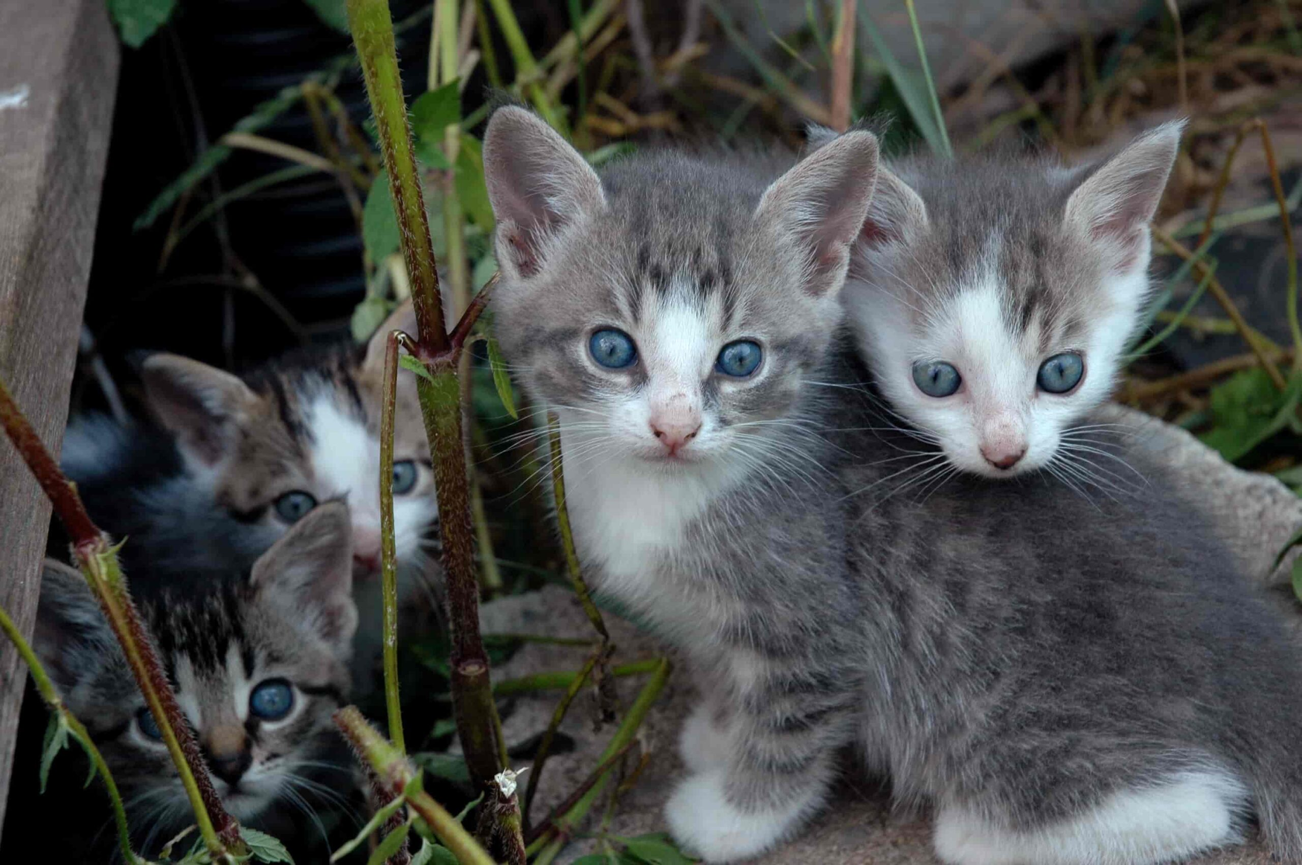 kittens in Slakki petting zoo