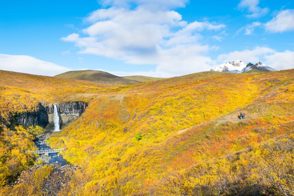 autumn at Svartifoss waterfall in Skaftafell Vatnajökull National Park in south Iceland