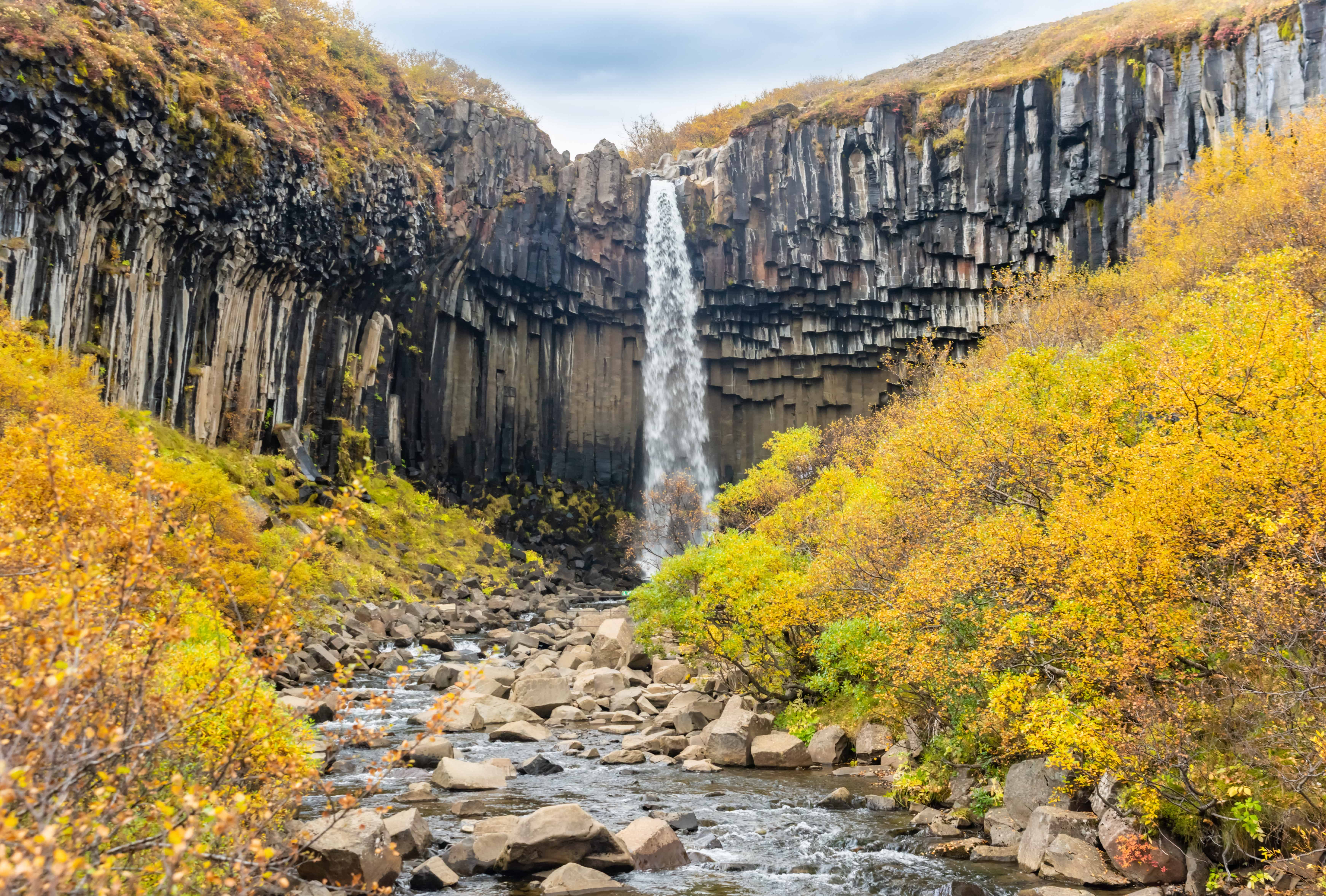 autumn at Svartifoss waterfall in Skaftafell Vatnajökull National Park in south Iceland