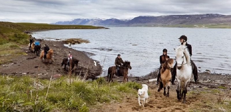 Horse Riding in Akureyri north Iceland