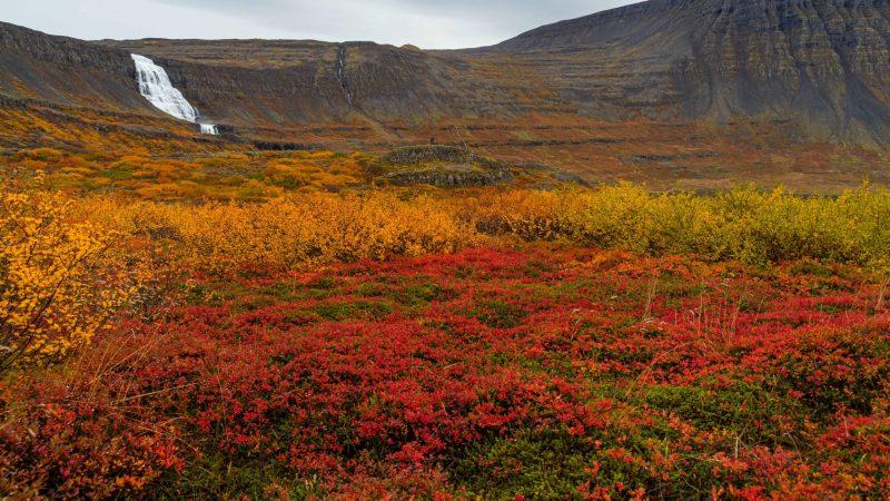 autumn at Dynjandi waterfall - Westfjords
