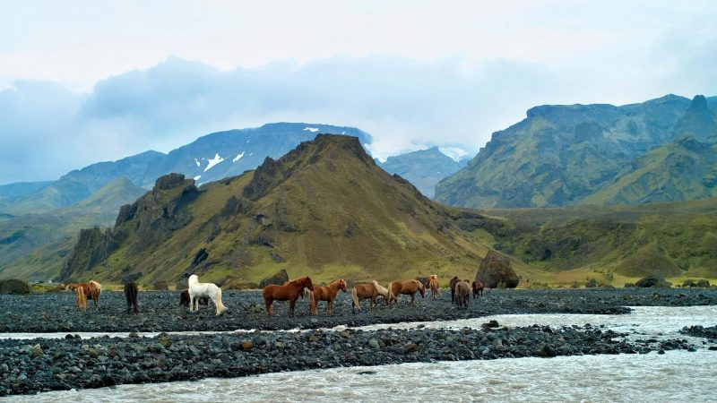 Horses in Þórsmörk