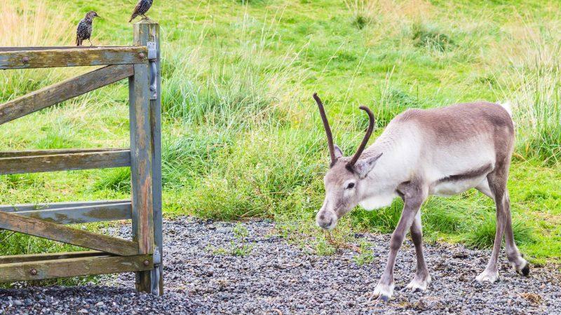 Husdyragardurinn zoo in Reykjavik