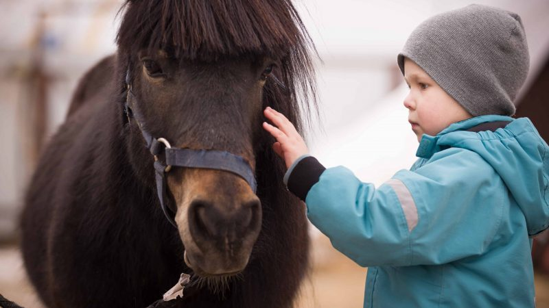 little kid with Icelandic horse in Iceland