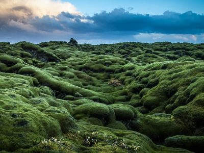 lava fields on Reykjanes Peninsula private tour