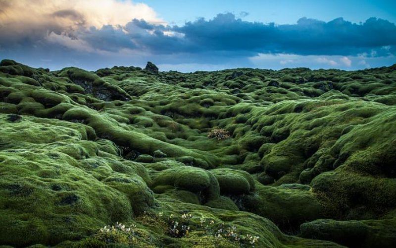 lava fields on Reykjanes Peninsula private tour